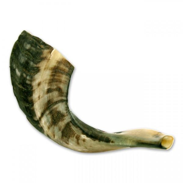 Mittleres Schofar - ca. 30 cm lang