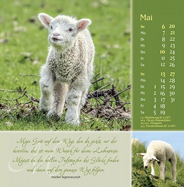 Sei behütet und gesegnet 2019 - Psalm 23 Postkartenkalender