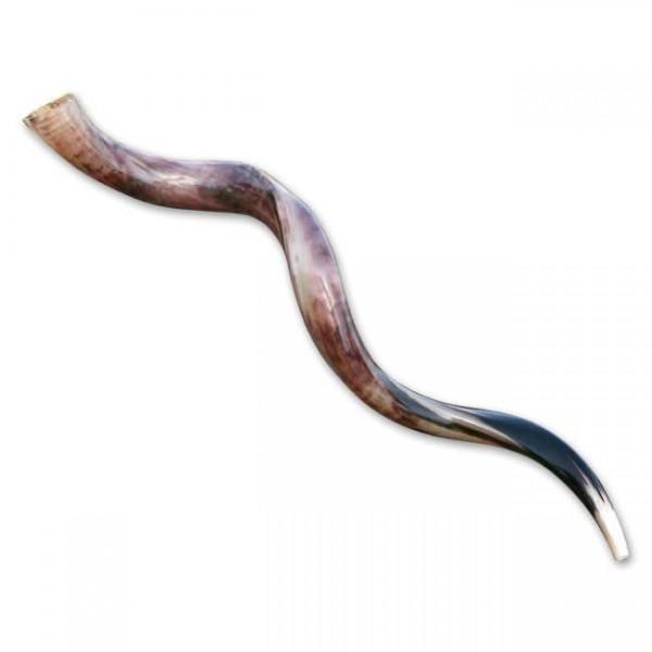 Jemenitisches Schofar, ca. 69 bis 82 cm